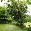 Sarlat_2012 06_4493879