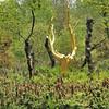 Forêt de Brocéliande (Koadeg Breselien) - L'Arbre d'or du Val sans Retour