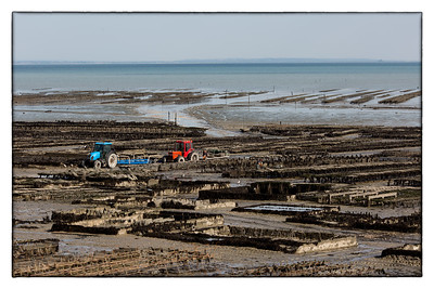 Oyster farming, Cancale.