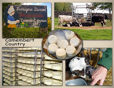Camembert cheese farm