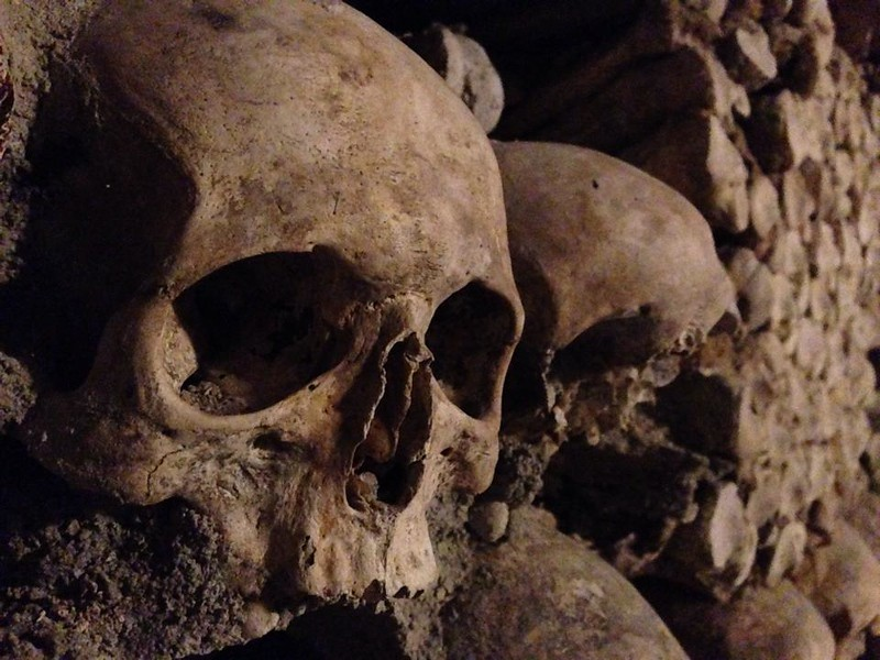 Close up of a Skull in the Paris Catacombs