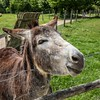 Friendly Donkey