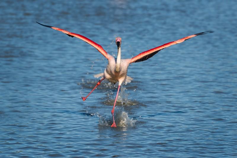 Wobbly Water Landing