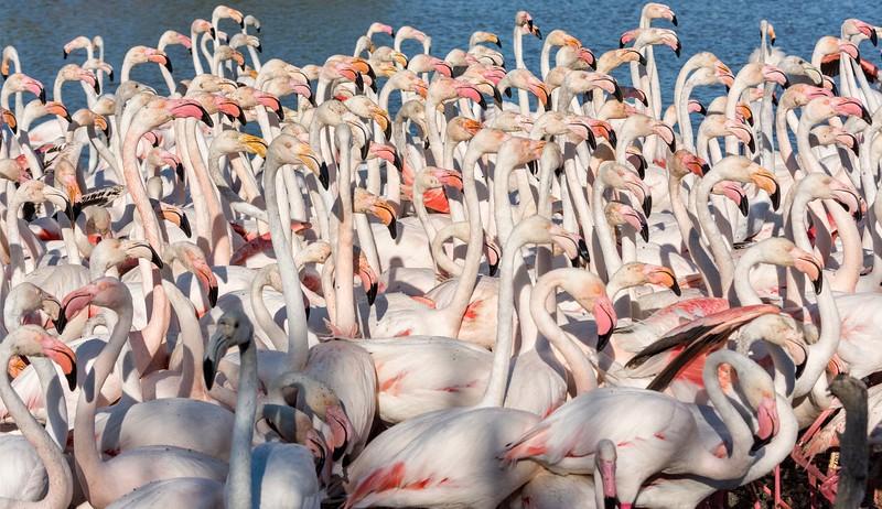 Flock Meeting