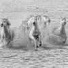 Fairy-Taled Horses