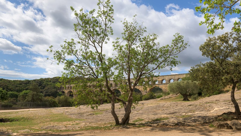 Tree with Aqueduct on Background