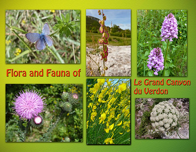 Flora and fauna of Gorges du Verdon