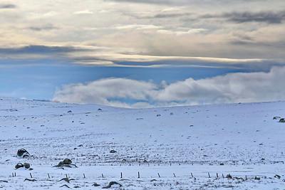 plateau, monochrome, aubrac, hiver