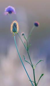 Herbes dans le désert des Agriates (Corse - Balagne)