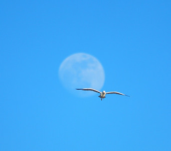 lune, mouettes