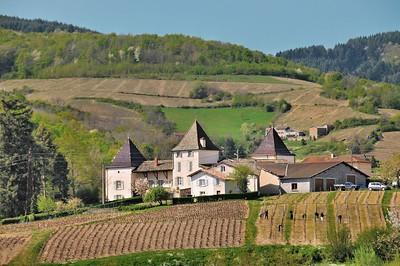 Dans les vignes de Brouilly