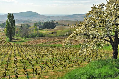 Vue vers le Mont Brouilly