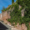 Ivy Covered Stone Wall