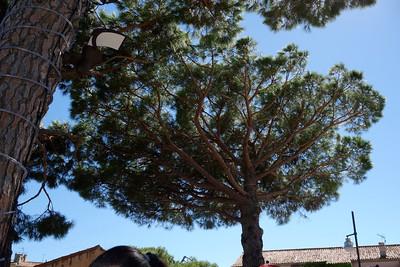 St_Tropez_Ubrella_trees_DSC0971