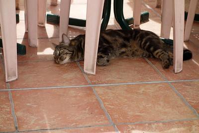 St_Agnes_kitty_laydown_DSC0916