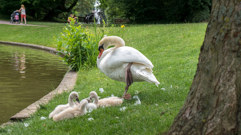 Top Things to do in Strasbourg France: Park L'Orangerie baby swans