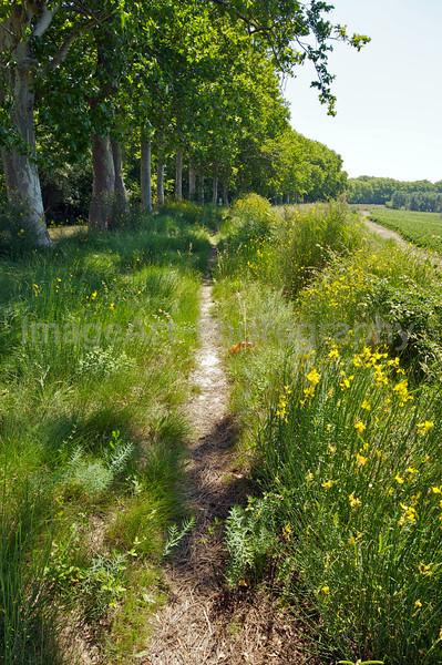 Path along the Canal du Midi
