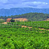 Vineyards in the Languedoc