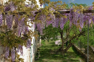 Lauzerte - Le printemps des glycines