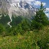 Wild flowers in Val Ferret