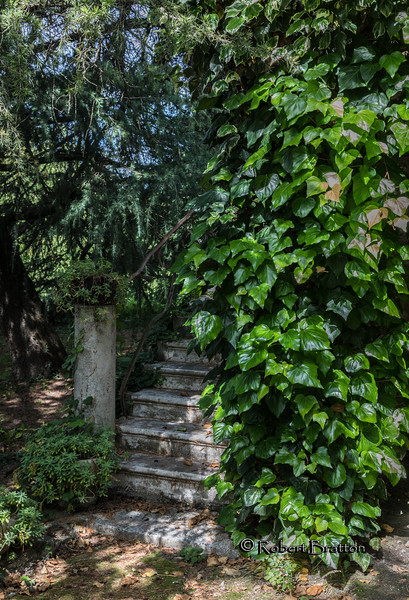 Ivy Covered Stairs
