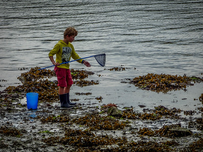Crabbing in low tide -  Conleau France