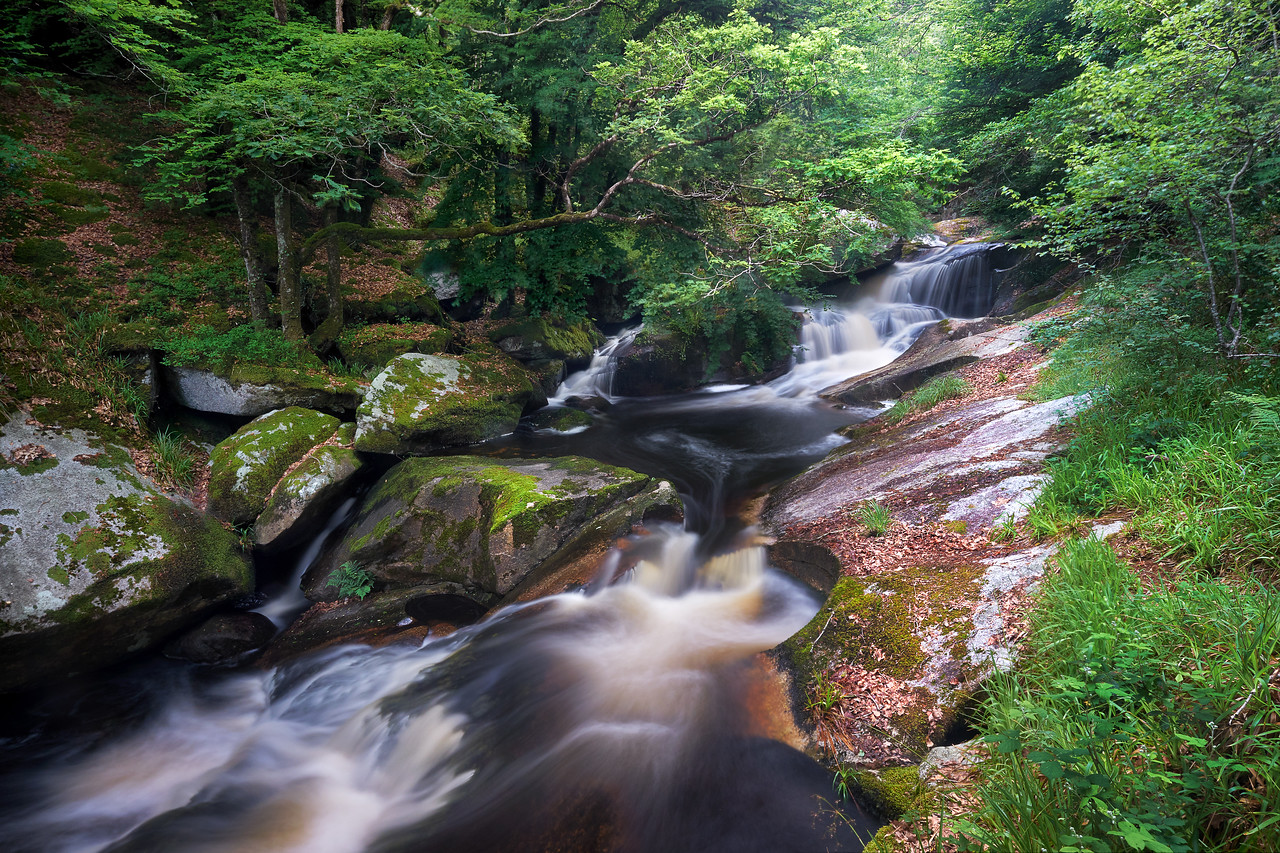 Take a breath in forests from Britanny