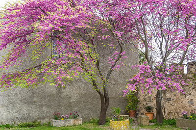 Colors of Cahors