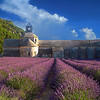 Senanque Abbey and Lavender Fields in Provence, France