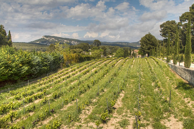 Vineyard, Cassis, Provence Region, France
