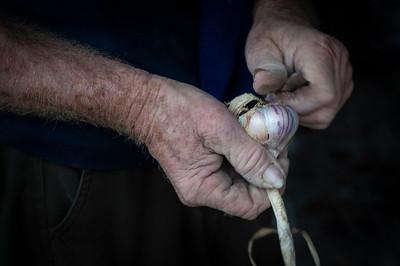 Farmer's Hands