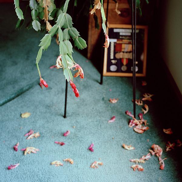 Elizabeth_Ellenwood_Christmas_Cactus