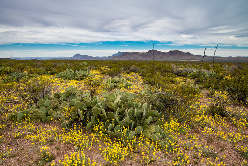 Desert Bloom February 2019