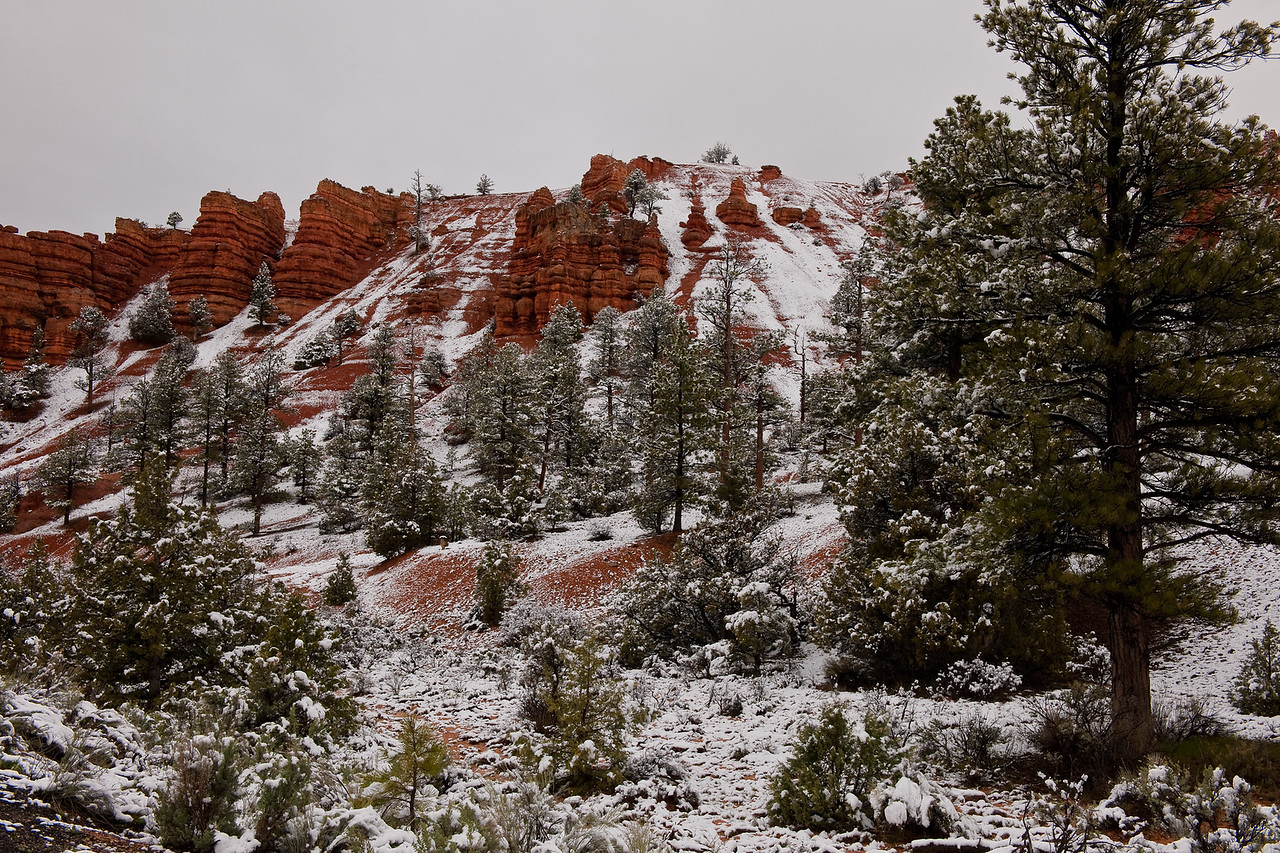 Red Canyon, Utah-  As we drove down SR 12 headed back to Las Vegas to catch our flights home, we passed back through Red Canyon just before intesecting US 89, and this is what we saw.  It snowed the night before and although the skies were grey, the red rocks were beautiful to see contrasted with the snow that clung to the trees and filled the deeper crevices in the cliffs.  It wasn't very cold, so I'm sure that a few hours after we saw this scene, it was gone.  Most of the time getting a nice image is being in the right place at that just right time!