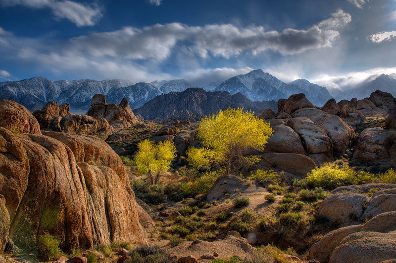Alabama Hills Tree HDRI 2