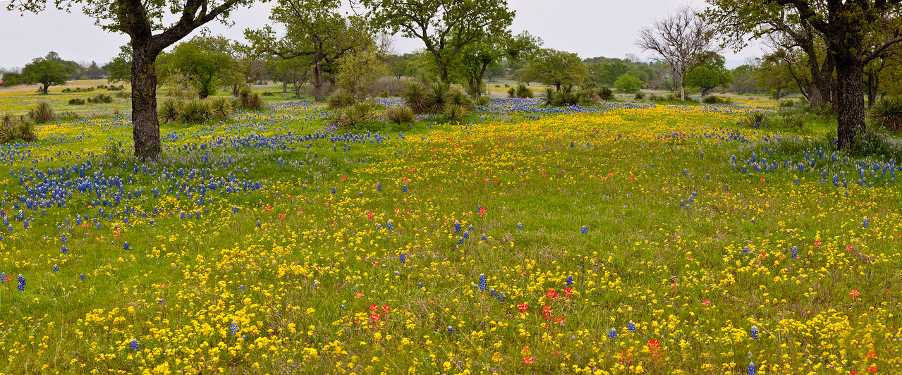 An airport near Tow, Texas is adorned with wildflowers in the spring of 2010.