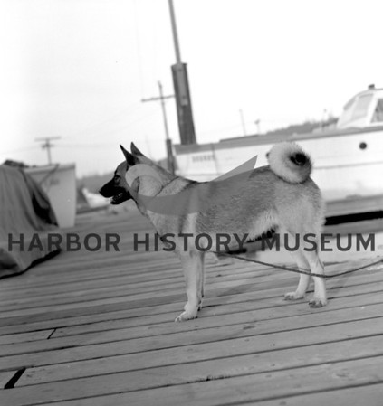 Wayne Clark's dog Tinka at the Pen Yacht Basin