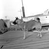 Wayne Clark's dog Tinka at the Pen Yacht Basin