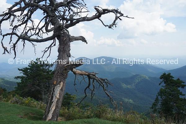Tree on the Blue Ridge Parkway