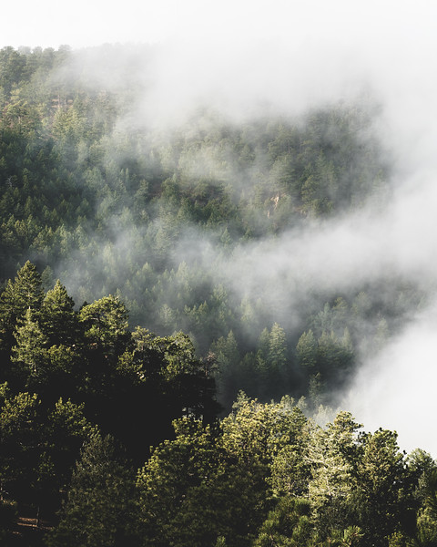 Frankieboy Photography |  Fog and Trees | Rocky Mountain Landscapes Lookout Mountain