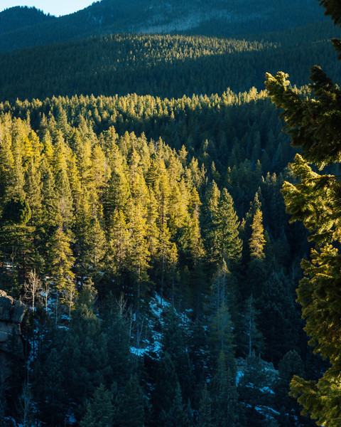 Frankieboy Photography |  Evergreen Views | Rocky Mountain National Park