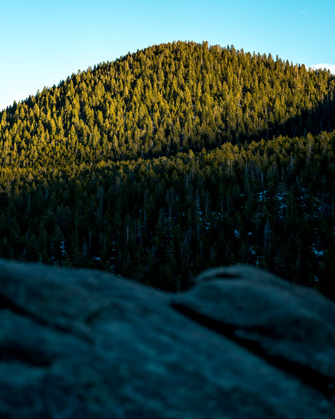 Frankieboy Photography | Covered In Colorado Pine