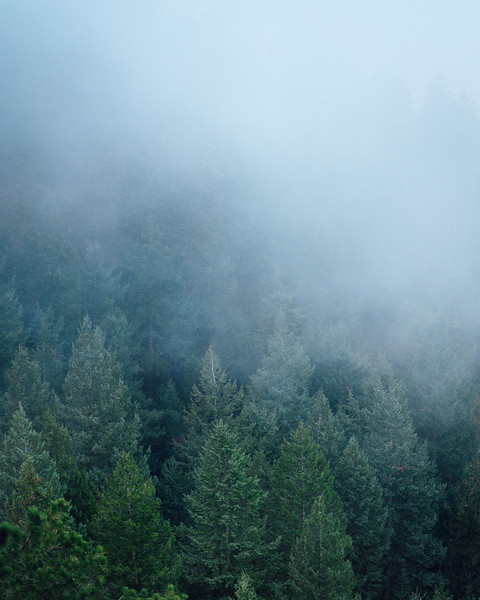 Pine Trees Veiled With Fog | Rocky Mountain National Park Colorado