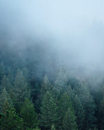 Pine Trees Veiled With Fog | Rocky Mountain National Park Colorado