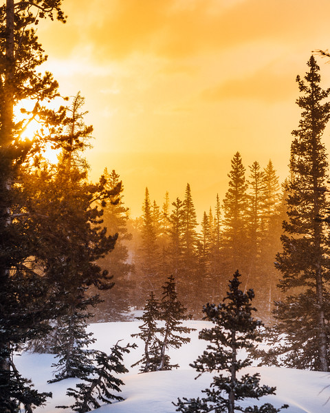 Frankieboy Photography | Golden Winters
