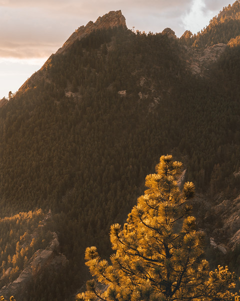 Frankieboy Photography |  Boulder Gold