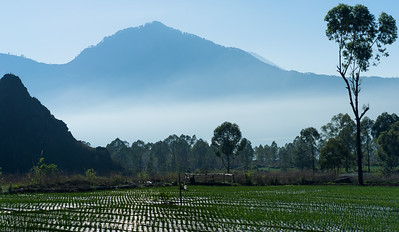 Frankieboy Photography |  Onion Fields Bali