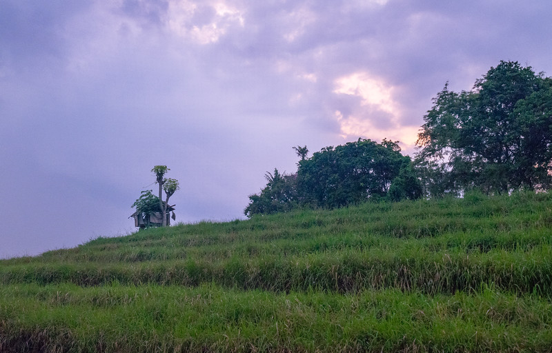 Country drives Ubud