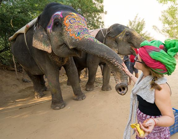 Feeding elephants in Jaipur