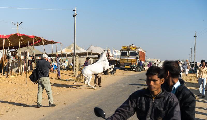 Frankieboy Photography |  Camel Festival